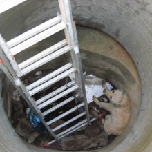 Dog Valentina thrown in a Sewer | RO | 2014