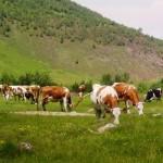 Vacabaltata