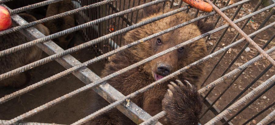 Janukowitsch Bears 2014 Feb