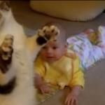 Pisicile și bebelușii se înțeleg de minune – VIDEO