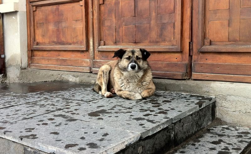 Stray Dogs in Romania 2014