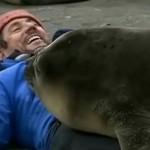 Cum îmbrățișează o focă – VIDEO