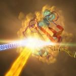 Cum arată o proteină: imaginea cu cea mai bună rezoluție realizată vreodată