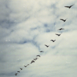 Lectia de zbor