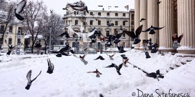"""""""Prin Bucureștiul meu"""": fotografii de Dana Ștefănescu"""