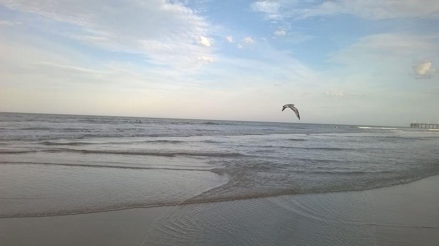 plaja6