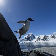 Pinguini în Antarctica